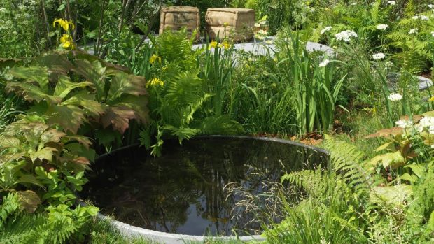 Pond life how to get your water garden fit for fish and for Garden pond life