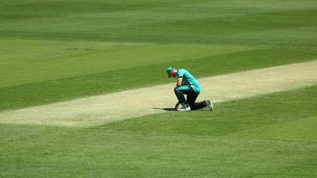 Australia's Steve Smith inspects the pitch during a training session. Photo: Chris Hyde/Getty Images