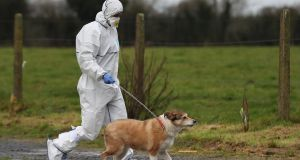 A garda removes a dog from a house in Edenderry, Co Offaly, where a man was stabbed to death. Photograph: Niall Carson/PA