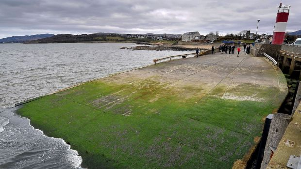 The algae covering the slipway at Buncrana pier in Donegal were five people died. Photograph: Justin Kernoghan