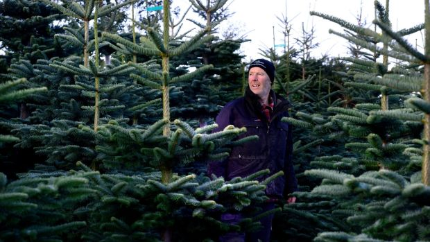 Christy Kavanagh at Kavanaghs Christmas Tree farm in Newtownmountkennedy, Co Wicklow. Photograph: Cyril Byrne