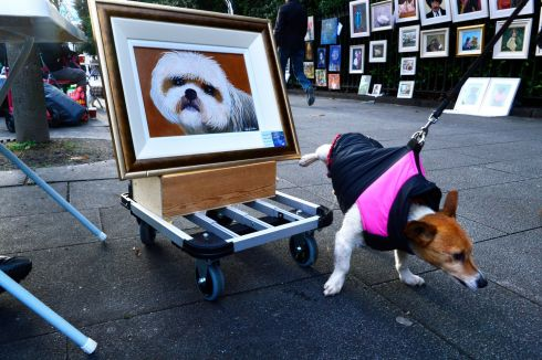 FRIDAY: A terrier called 'Frank' passing a work of art by artist Jackie Cullen in the People's Art exhibition at St Stephen's Green. Photograph: Cyril Byrne/The Irish Times