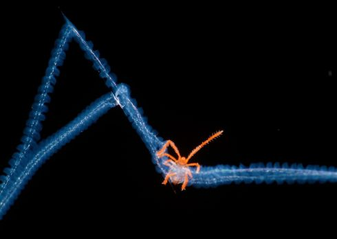 Acari trapped in spiderweb by Bernardo Segura which was given an Honorable mention in the Micro-imaging category.
