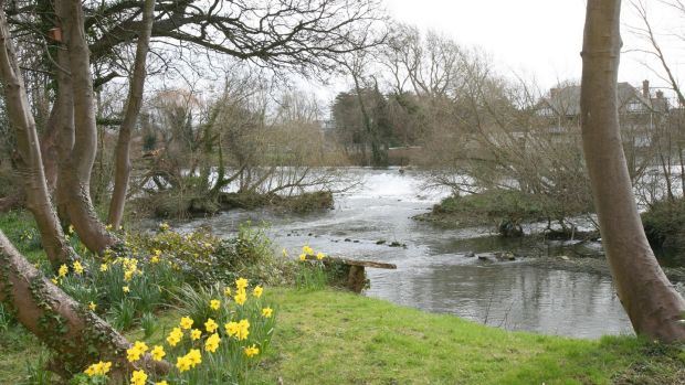 "Chapelizod in Dublin: ""Rivers are special, one of the few remaining places you get the sense of naturalness"", says National Biodiversity Data Centre director Liam Lysaght"