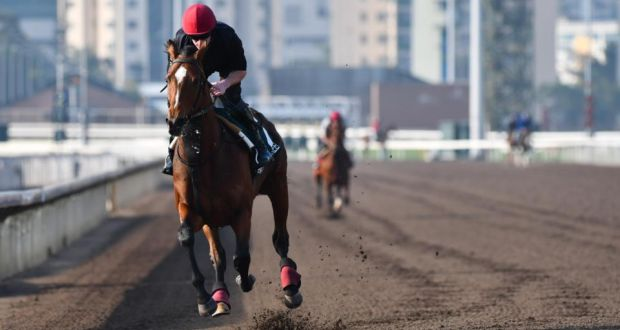 Aidan Obrien Highland Reel Will Be Hard To Replace