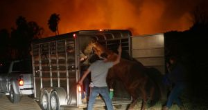 Volunteers rescue horses at a stable during the 'Lilac fire' in Bonsall, California, on Thursday. Photograph: Sandy Huffaker/AFP/Getty Images
