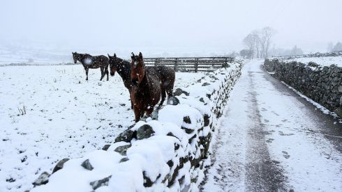 Horses in a field in Cloughoge, Newry, as parts of Ireland woke up to a blanket of snow caused by an Arctic airflow in the wake of Storm Caroline. Photograph: Brian Lawless/PA Wire