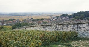 A vineyard in Volnay, Cote de Beaune, Burgundy. Photograph: Panoramic Images