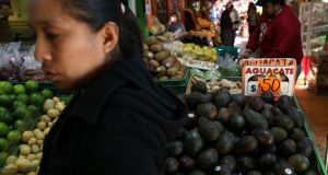 Mexico's avocado producers have seen their profits soar due to Nafta. Photograph: Justin Sullivan/Getty Images