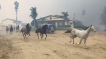 Eyewitness footage captures volunteers rushing to rescue horses in California
