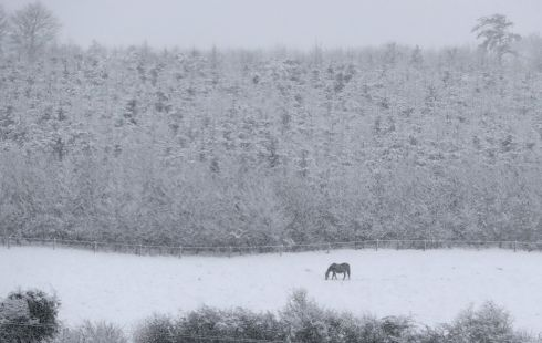 NEIGH BELLS: A horse stands in a snow-covered field in Moneygall in Co Offaly. Photograph: Niall Carson/PA Wire