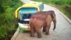 Wild elephant attacks vehicles in China
