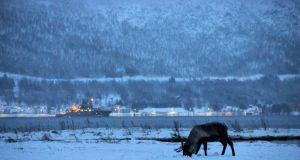 A reindeer grazing in the snow as a Norwegian patrol ship passes behind south of Tromso, Norway. Photograph: Stephen Starr