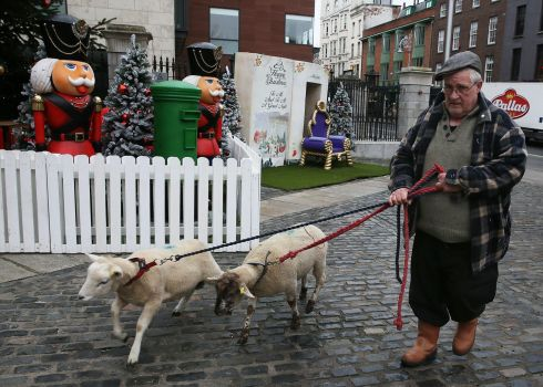 LIVE ANIMAL CRIB: Paul Finn of Gallagher's Farm in Enniskerry, Co Wicklow, brings sheep to the IFA Live Animal Crib at the Mansion House in Dublin. Photograph: Brian Lawless/PA Wire
