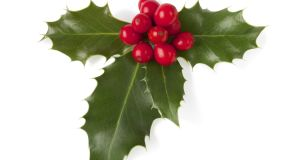 Holly with berries: became a Christian symbol