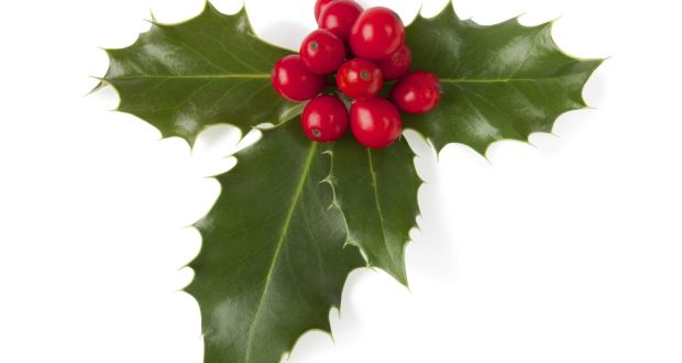 Holly With Berries Became A Christian Symbol