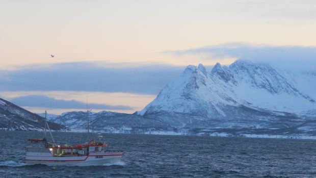 Norway's most northerly fjords have become a new home for herring and other Atlantic fish species. Photograph: Stephen Starr