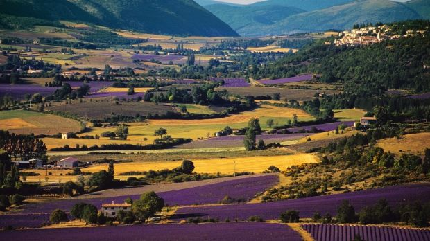 Lavender fields in Provence France, ideal for exploring at certain times of the year.