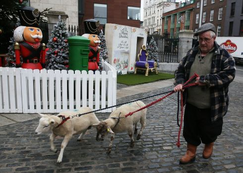 CASTING CALL Paul Finn, of Gallagher's Farm in Enniskerry, Co Wicklow, brings sheep to the IFA Live Animal Crib at the Mansion House in Dublin. The farm has been providing animals for the annual attraction for all 21 years of its existence. Photograph: Brian Lawless/PA Wire