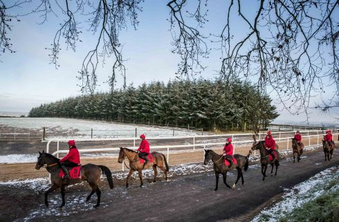 ON THE GALLOPS Horses at Jessica Harrington's yard, in Co Kildare, for the launch of the Leopardstown Christmas Festival. Photograph: Morgan Treacy/Inpho