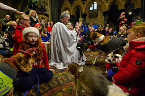ALL GOD'S CREATURES The Very Rev Dermot Dunne blesses Peata therapy dogs during a carol service at Christ Church, in Dublin. Photograph: Cyril Byrne