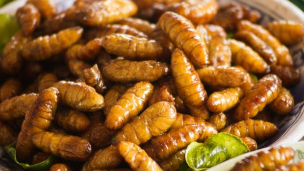 Silkworms: insects could become the ultimate sustainable food source. Photograph: iStock