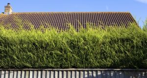 There's more to hedging than leylandii. Photograph: Getty Images