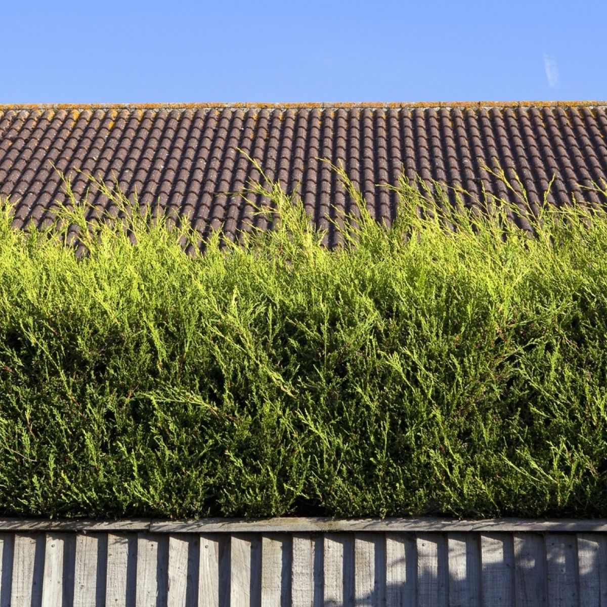 Give me shelter: how to grow a native Irish hedge