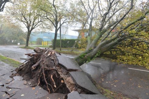Fallen trees at Marina Park, Cork City during Storm Ophelia.  Photograph: Michael Mac Sweeney/Provision