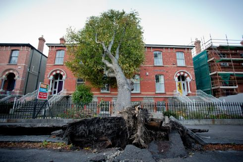 A fallen tree on Northbrook Road , Ranelagh after Storm Ophelia. Photograph: Tom Honan / The Irish Times