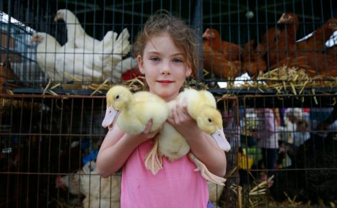Megan Grant (10) of Slievardagh poultry with her Aylesbury ducklings at the Tullamore Show in August.  Photograph Nick Bradshaw / The Irish Times
