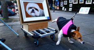 A terrier called 'Frank' passing a work of art by artist Jackie  Cullen in the People's Art exhibition at St Stephens Green in December. Photograph: Cyril Byrne/ The Irish Times