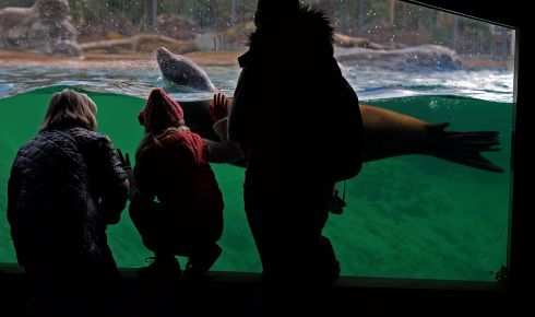 Visitors get up close and personal at Sea Lion Cove , in Dublin Zoo in January.  Photograph: Eric Luke / The Irish Times