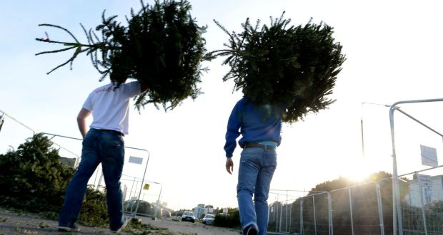 Many local authorities are accepting them for recycling free of charge,  albeit for limited periods - Pack Up The Tinsel: Where To Recycle Your Christmas Tree