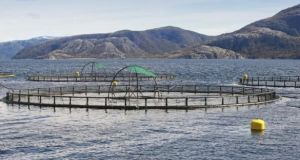 A fish farm with round cages for salmon growing.