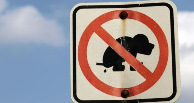a councillor has described as ridiculous the lack of dog fouling fines issued in cork