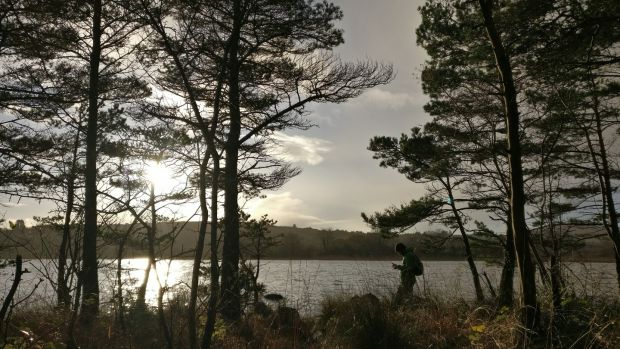 Down on the lakeshore there are some wonderful gnarled scots pine, and waterlogged alder and willow