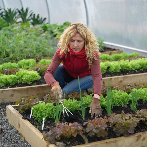 Organic kitchen gardener Kitty Scully, who now heads up Vox Pro's kitchen garden in Cork. Photograph: Richard Johnston
