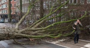 A man who escaped unharmed makes a phone call after his scooter was hit by a crashing tree uprooted by heavy winds in Amsterdam, Netherlands. Photograph: Peter Dejong/AP