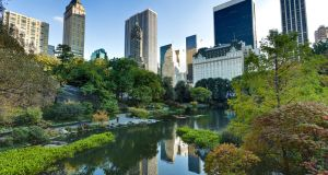 Central Park: keen birders can find as many as 100 species here on a single autumn day. Photograph: iStock