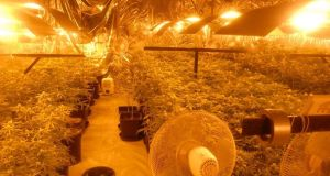 A view of the grow-house in Co Longford where €360,000 worth of cannabis plants was seized. Photograph: An Garda Síochána