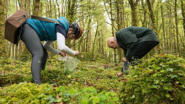Conor Pope goes foraging with head pastry chef Paula Stakelun. Photograph: Keith Heneghan/Phocus