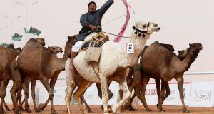 A man cheers as he rides a camel during King Abdulaziz Camel Festival in Rimah Governorate, north-east of Riyadh, Saudi Arabia January 19th, 2018. Photograph:  REUTERS/Faisal Al Nasser