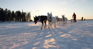 The new Finland adventure holiday offers a chance to  swap playdates for a husky safari this mid-term break