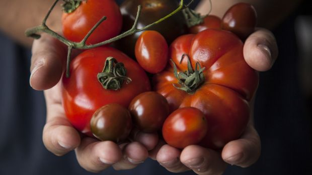 There are up to 25,000 varieties of tomato. Photograph: Getty Images