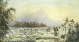 'Elephants Watering Amongst Water Lilies, Ceylon'