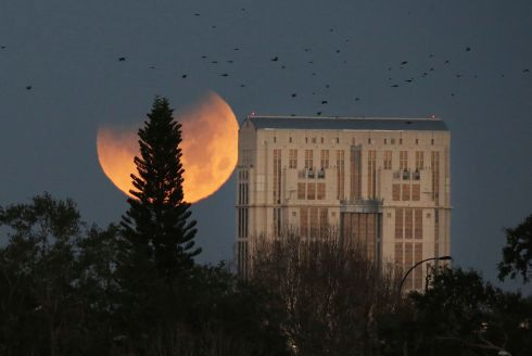 ORANGE ALRIGHT: Birds take flight as the supermoon  sets behind the Orange County Courthouse in Orlando, Florida. Photograph: Red Huber/Orlando Sentinel via AP