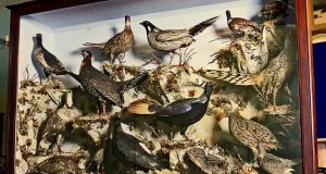 A cased display entitled The Pheasants of the World by John Leadbeater, a leading 19th-century London taxidermist, holder of a Royal Warrant from Queen Victoria. Estimate €3,500-€5,000 at Victor Mee Auctions, Cloverhill