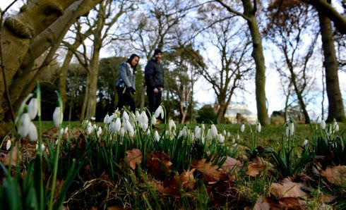 GOODBYE WINTER? Snowdrops in the Botanic Gardens in Dublin. Photograph: Cyril Byrne/The Irish Times