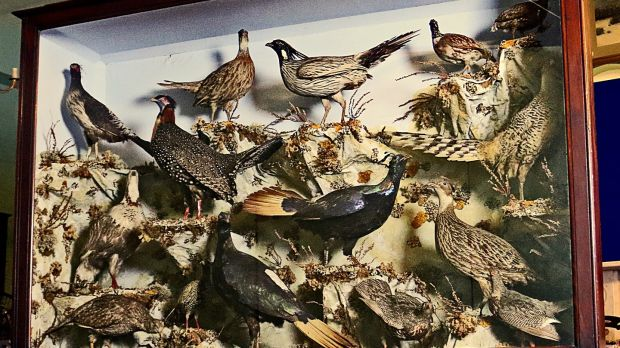 The Pheasants of the World by John Leadbeater